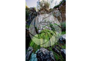 Woodwardia radicans. Chain fern