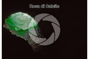 Rosa di Calcite. Retroilluminazione