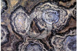 Stromatolite. Fossil. Precambrian