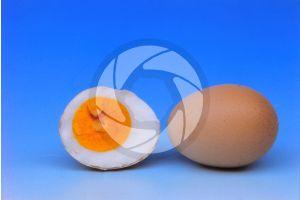 Gallus gallus domesticus. Chicken. Egg