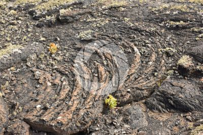 Pahoehoe. Lanzarote. Canary Islands. Spain