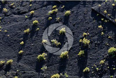 Lapilli. Gran Canaria. Isole Canarie. Spagna