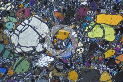 Picrite basalt. Costa Rica. Thin section in cross polarized light. 32X