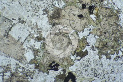 Gabbro. Thin section in plane polarized light. 32X
