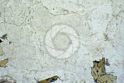 Granito Rosa Baveno. Piemonte. Italia. Sezione sottile in luce polarizzata. 32X