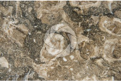 Rasotica Marble. Polished section