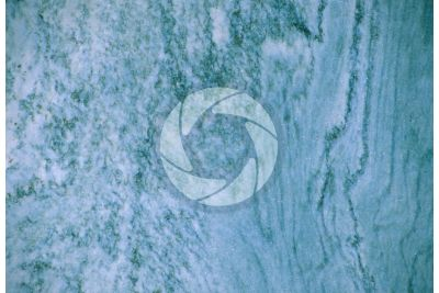 Verde Cipollino Marble. Tuscany. Italy. Polished section