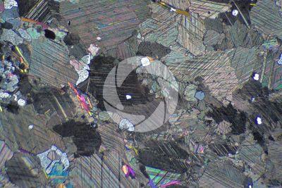 Marmo Rosa. Austria. Sezione sottile in luce polarizzata a Nicol incrociati. 32X