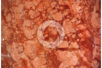 Rosso Asiago Marble. Veneto. Italy