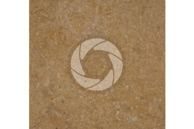 Giallo Atlantide Marble. Sinai. Egypt. Polished section. 1X
