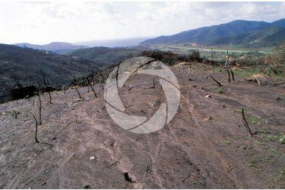 Erosione del suolo da ruscellamento
