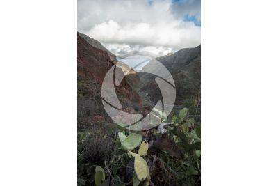 Gully. Gran Canaria. Canary Islands. Spain