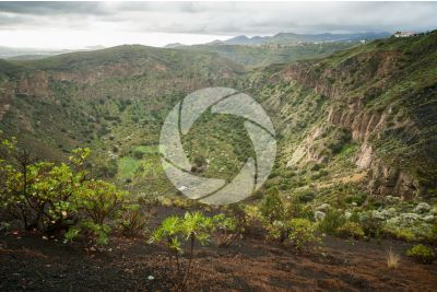 Bandama Caldera. Gran Canaria. Canary Islands. Spain