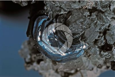 Geminated Hematite iron rose
