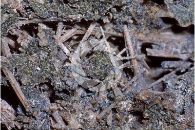 Kaliophilite