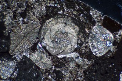 Bioclastic Limestone. Fossil. Thin section in cross polarized light with lambda filter. 32X