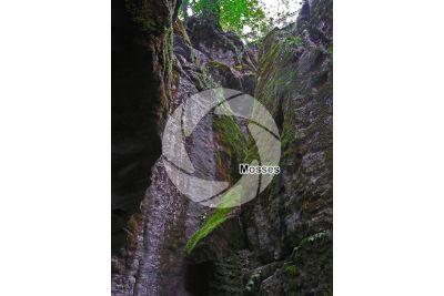 Bryophyta. Moss