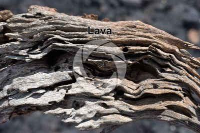 Lava. Lanzarote. Canary Islands. Spain
