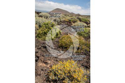 AA lava. Tenerife. Canary Islands. Spain