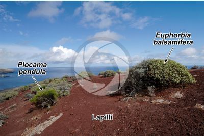 Lapilli. Tenerife. Isole Canarie. Spagna