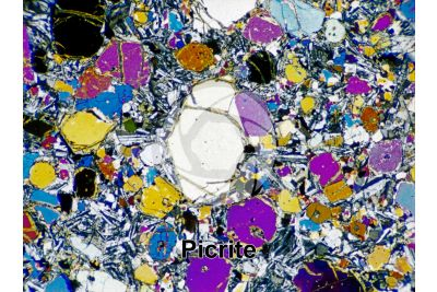 Picrite basalt. Costa Rica. Thin section in cross polarized light with lambda filter. 32X