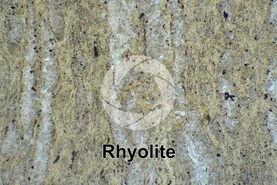 Rhyolite. Thin section in plane polarized light. 32X