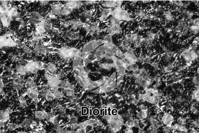 Diorite. Anzola. Piedmont. Italy. Polished section. 2X