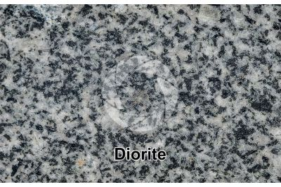 Diorite. Polished section. 1X