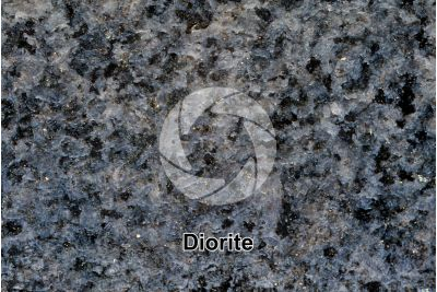 Diorite. Polished section. 2X