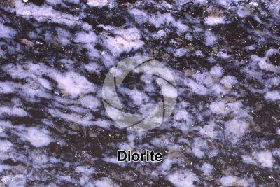 Diorite. Sezione lucida. 2X