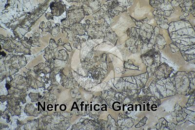 Nero Africa Granite. South Africa. Thin section in plane polarized light. 32X