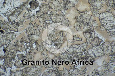 Granito Nero Africa. Sudafrica. Sezione sottile in luce polarizzata. 32X