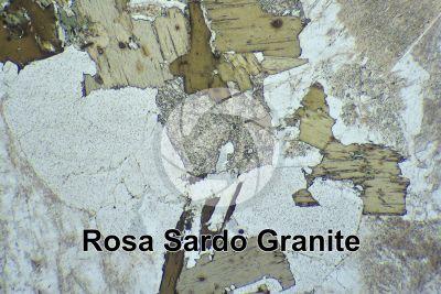 Rosa Sardo Granite. Sardinia. Italy. Thin section in plane polarized light. 32X