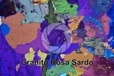 Granito Rosa Sardo. Sardegna. Italia. Sezione sottile in luce polarizzata a Nicol incrociati con filtro lambda. 32X