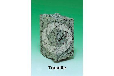 Tonalite. Adamello. Lombardy. Italy