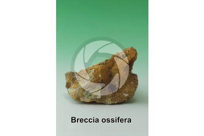Breccia ossifera