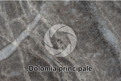 Dolomia principale. Castro. Lombardy. Italy. Polished section. 1X