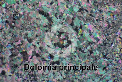 Dolomia principale. Castro. Lombardy. Italy. Thin section in cross polarized light. 32X