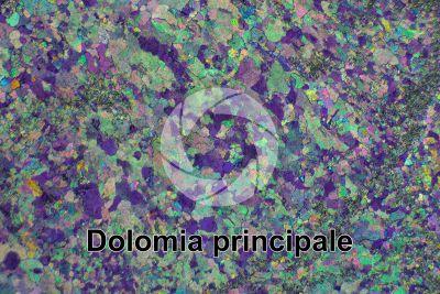 Dolomia principale. Castro. Lombardia. Italia. Sezione sottile in luce polarizzata a Nicol incrociati con filtro lambda. 32X