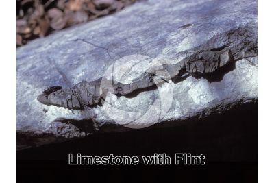 Limestone with Flint