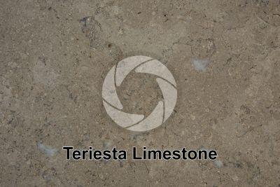 Teriesta Limestone. Sinai. Egypt. Polished section
