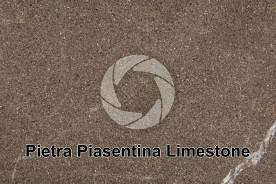 Pietra Piasentina Limestone. Udine. Italy. Polished section. 1X