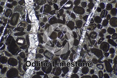 Oolitic Limestone. Thin section in plane polarized light. 32X