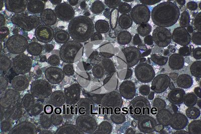 Oolitic Limestone. Thin section in cross polarized light. 32X