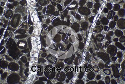 Calcare oolitico. Sezione sottile in luce polarizzata. 32X