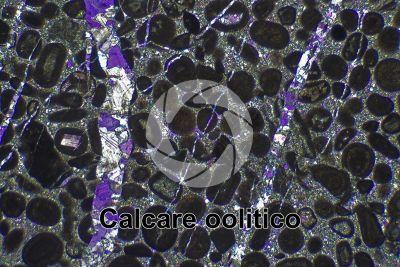 Calcare oolitico. Sezione sottile in luce polarizzata a Nicol incrociati con filtro lambda. 32X