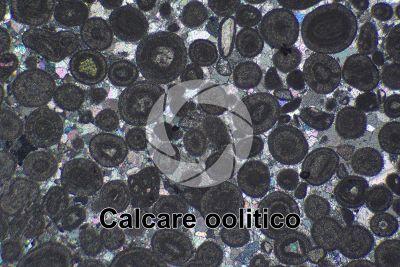 Calcare oolitico. Sezione sottile in luce polarizzata a Nicol incrociati. 32X