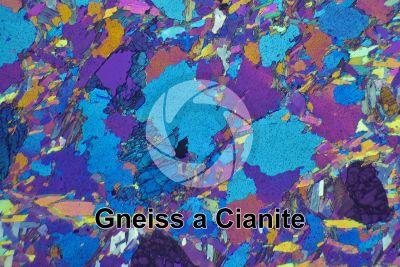 Gneiss a Cianite. Val di Sole. Trentino. Italia. Sezione sottile in luce polarizzata a Nicol incrociati con filtro lambda. 32X