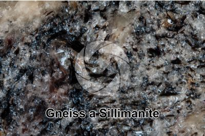 Gneiss a Sillimanite. Monte Gavia. Lombardia. Italia. Sezione lucida. 2X