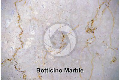 Botticino Marble. Lombardy. Italy. Polished section
